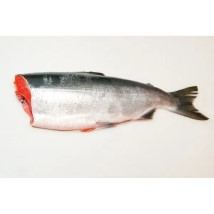 თევზი ორაგული გაყინული 1კგ